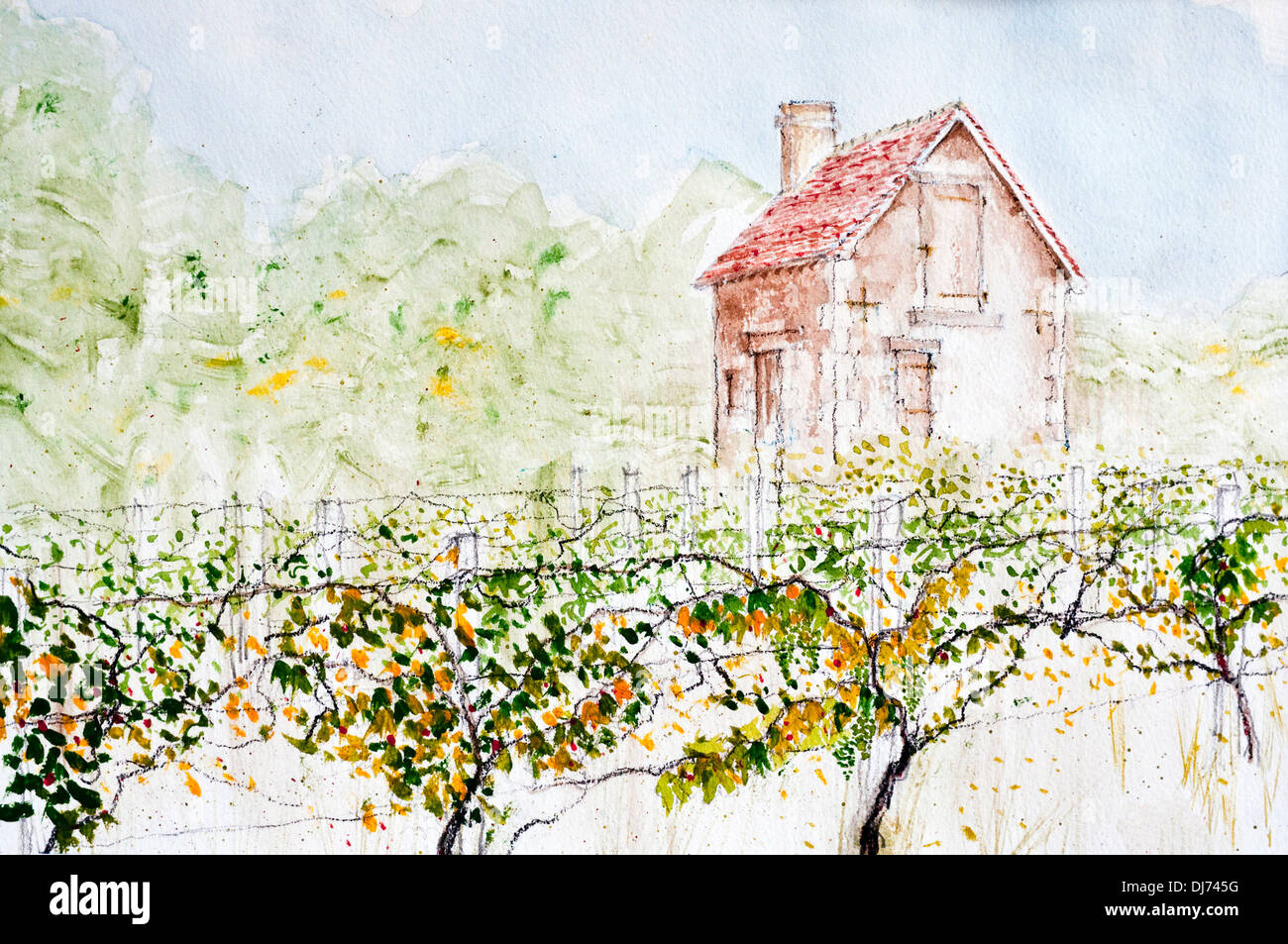 Watercolour painting of 'Maison des vignes' house in small vineyard by Ed Buziak - France. - Stock Image