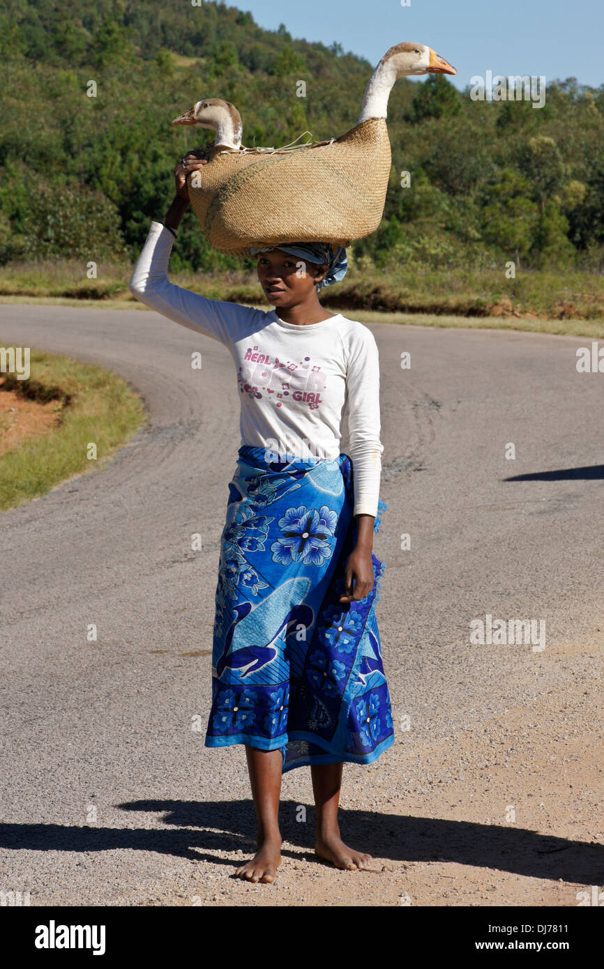 Malagasy woman carrying geese to market, Madagascar - Stock Image