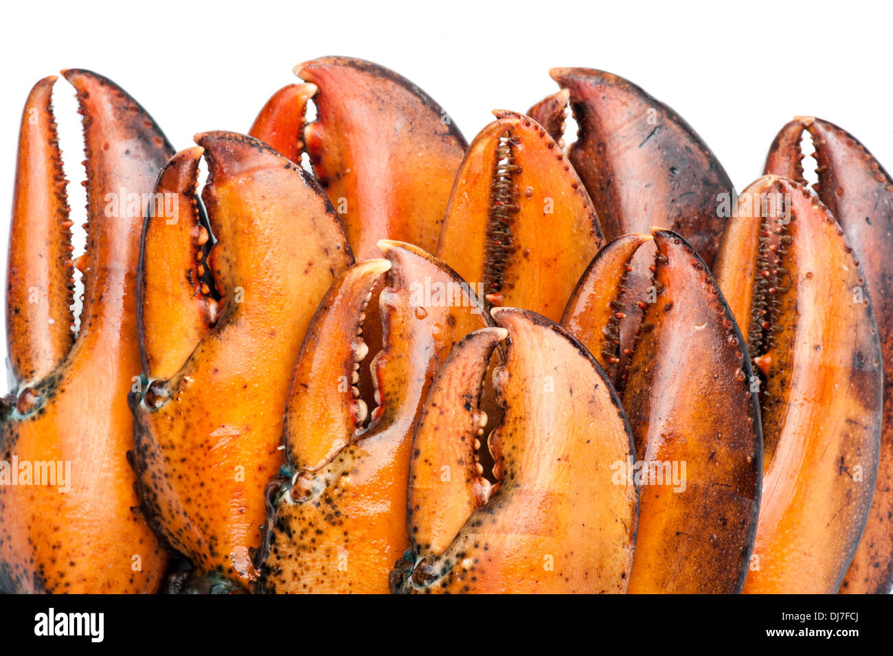 Lobster claws on white background - Stock Image