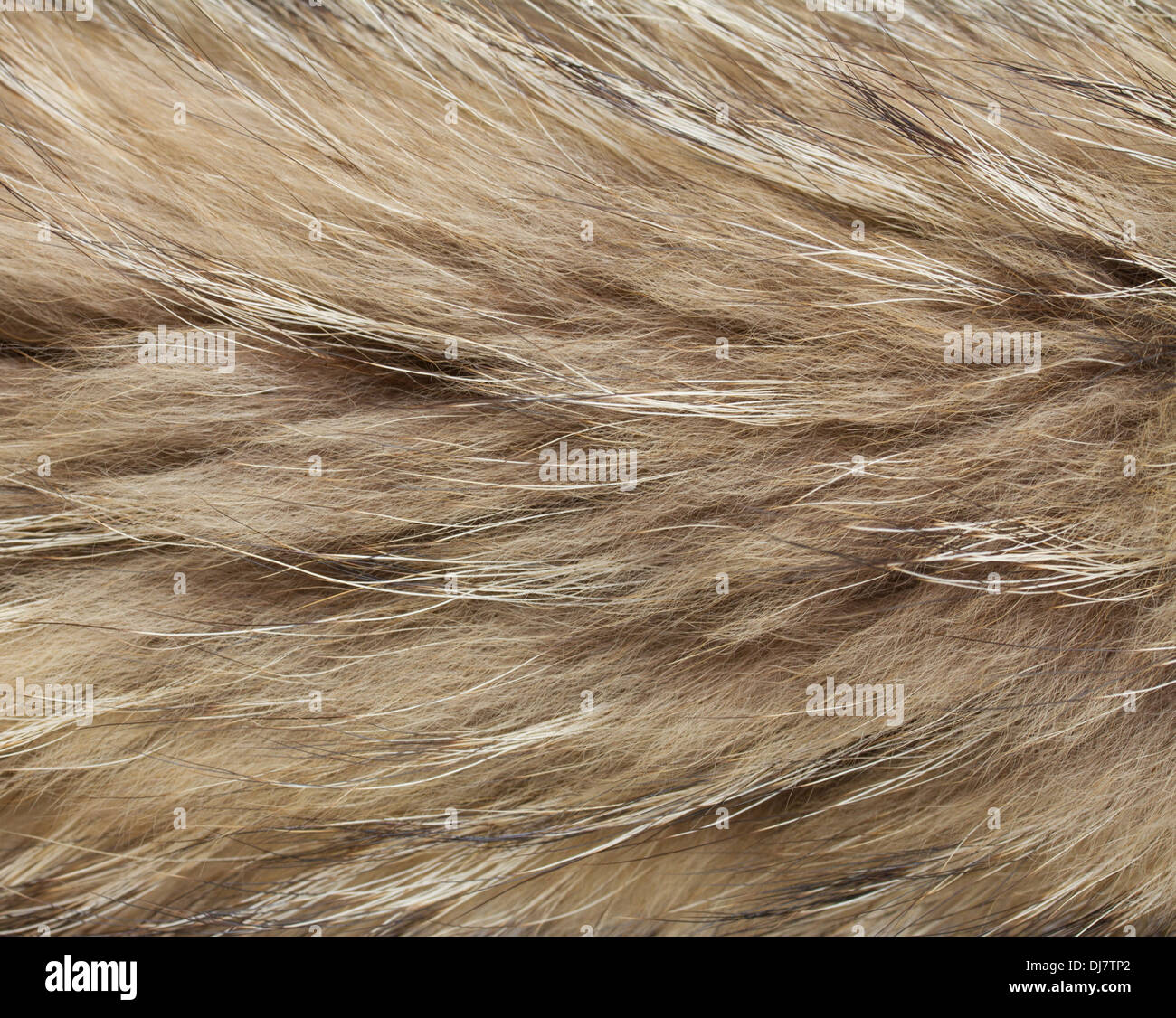 Animal Skin Rug Stock Photos & Animal Skin Rug Stock
