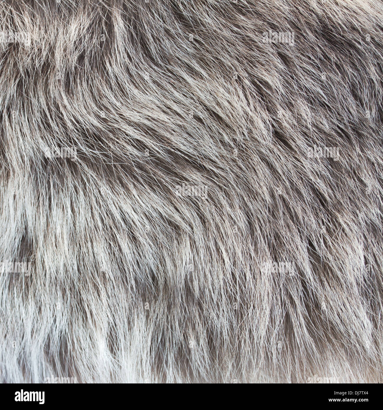 abstract fur background - Stock Image