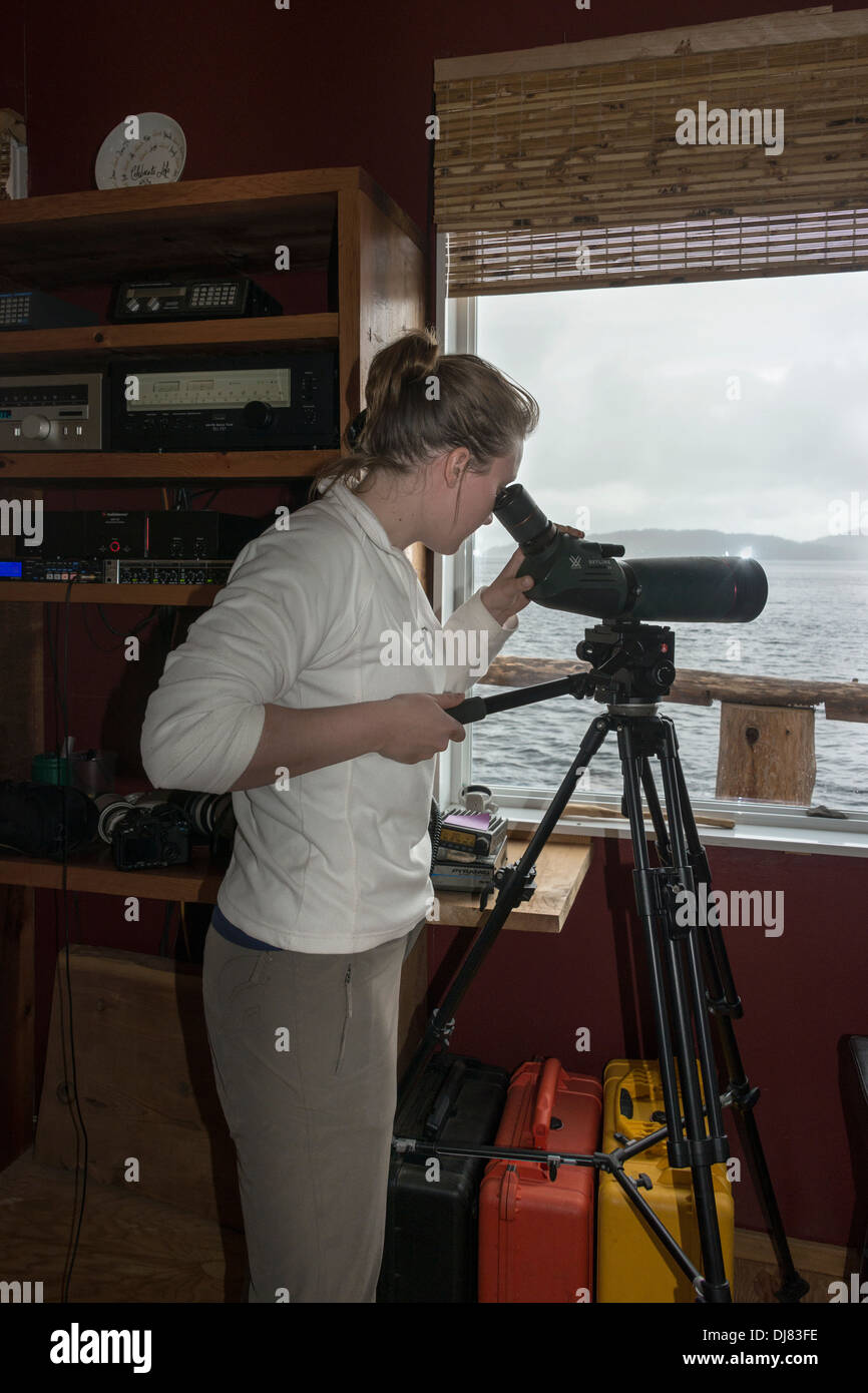Volunteer at Cetacea Lab looking through a spotting scope, Gil Island, mid-coast British Columbia - Stock Image