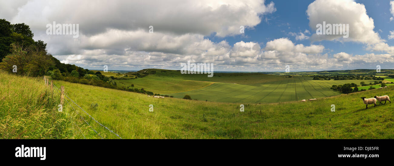 A panoramic view of sheep grazed pastures and farmland in front of Ivinghoe Beacon, Buckinghamshire. June. - Stock Image