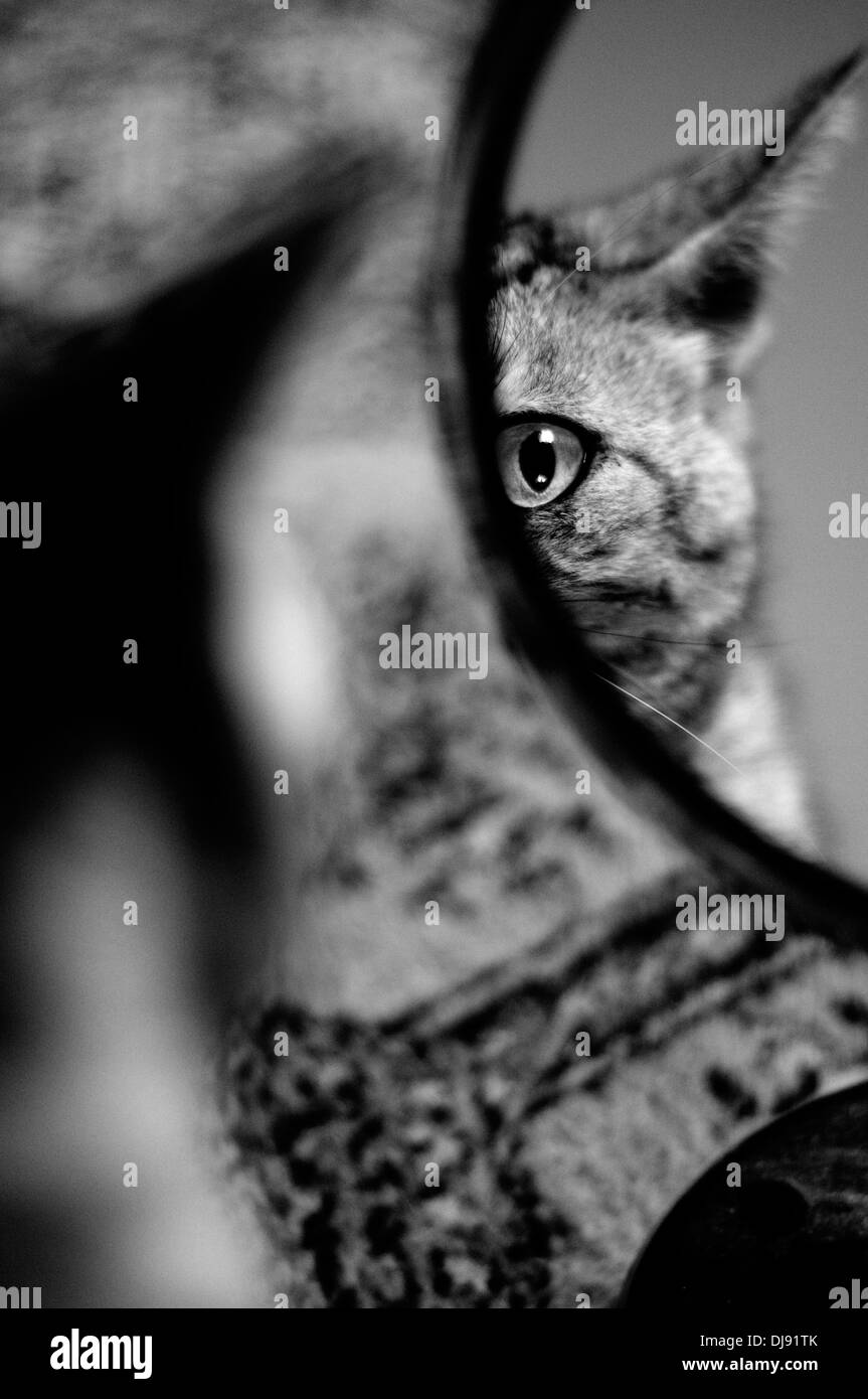 Cat at mirror - Stock Image
