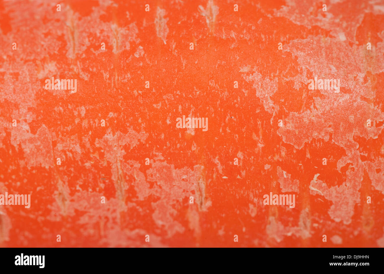 carrot abstract background macro texture - Stock Image