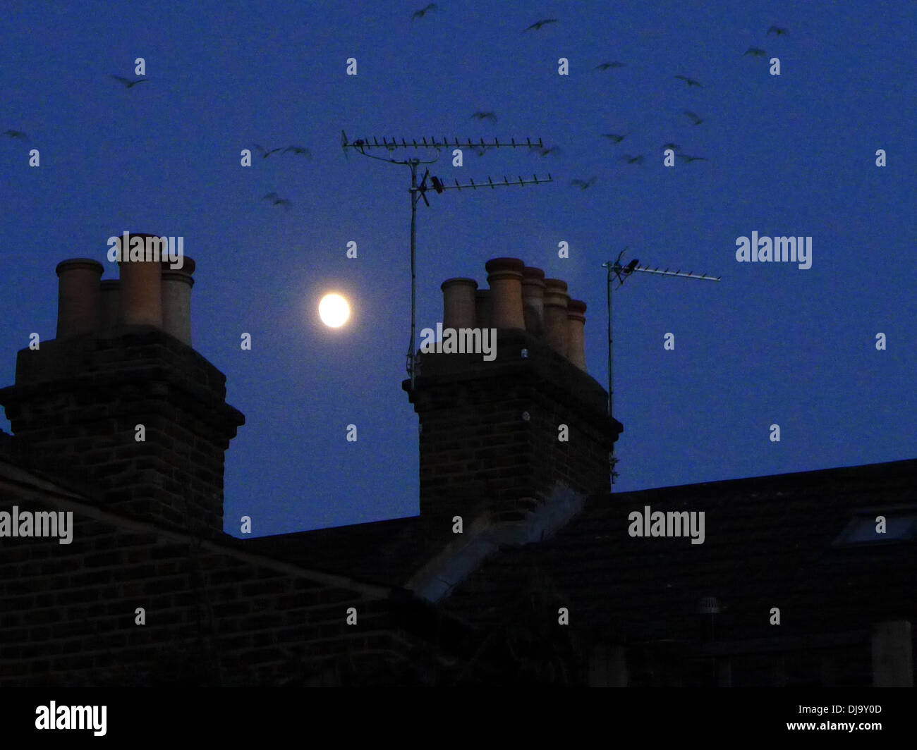 The moon shines over rooftops between two chimneys  at night as birds fly home to roost. - Stock Image