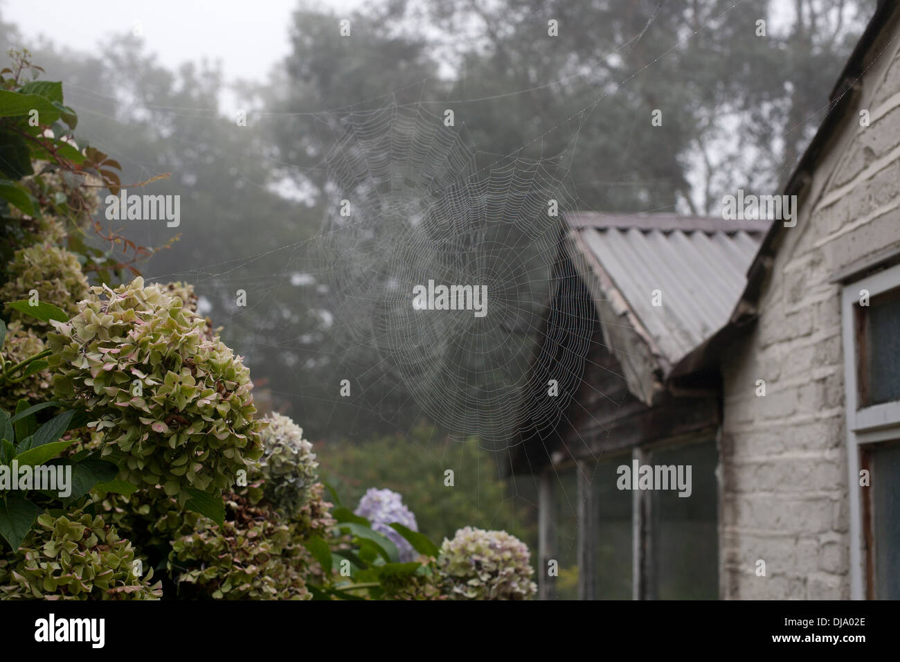 Large spiders webs, covered in misty dew drops. - Stock Image