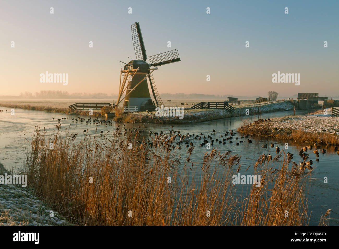 Drainage mill ''Hope springs eternal'' in  typically Dutch flat landscape in winter, Voorhout, South Holland, The Netherlands. - Stock Image