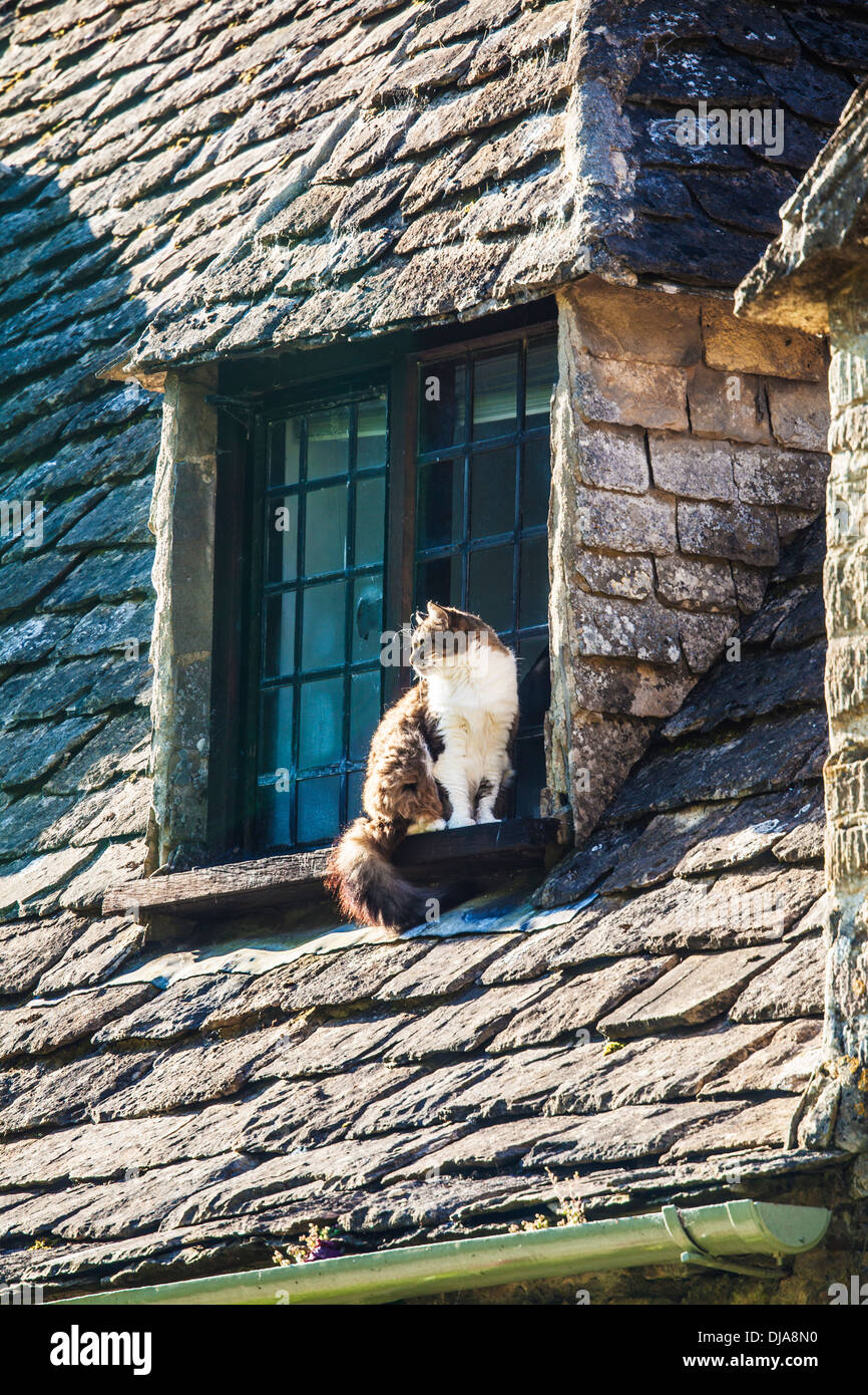 A cat sits on the window ledge of one of the famous weavers' cottages in Arlington Row, Bibury. - Stock Image