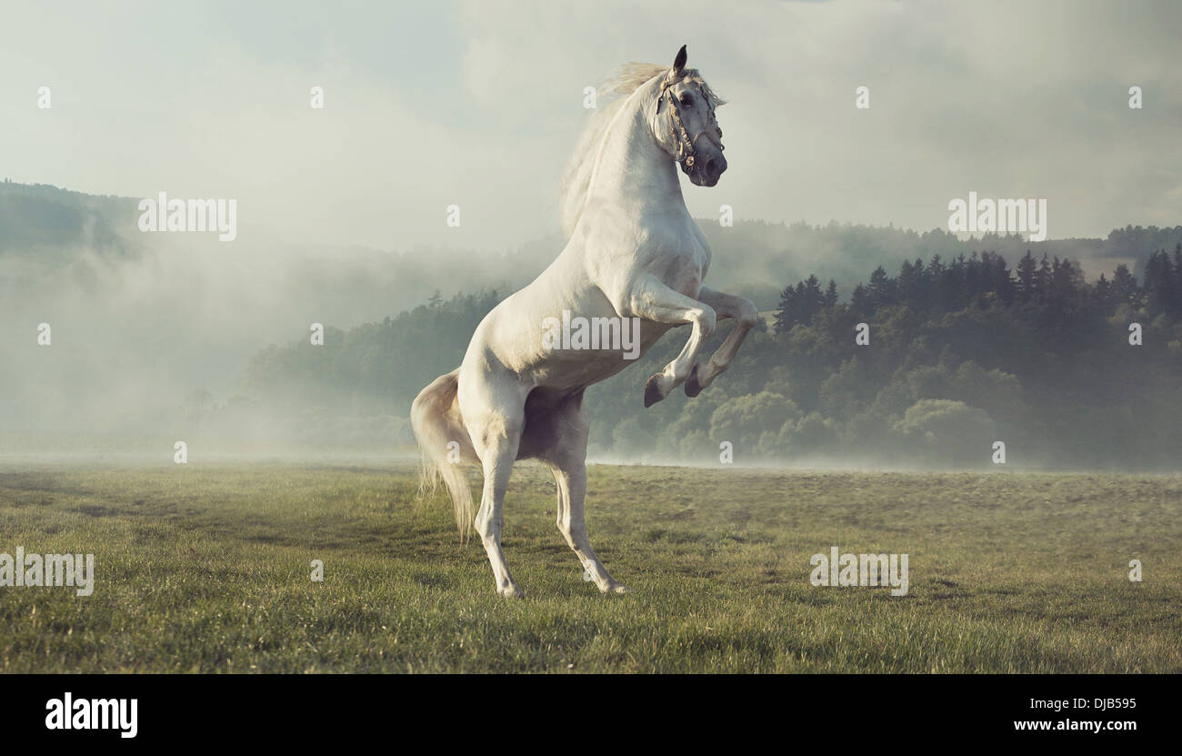 Strong white horse on the autumn green meadow - Stock Image