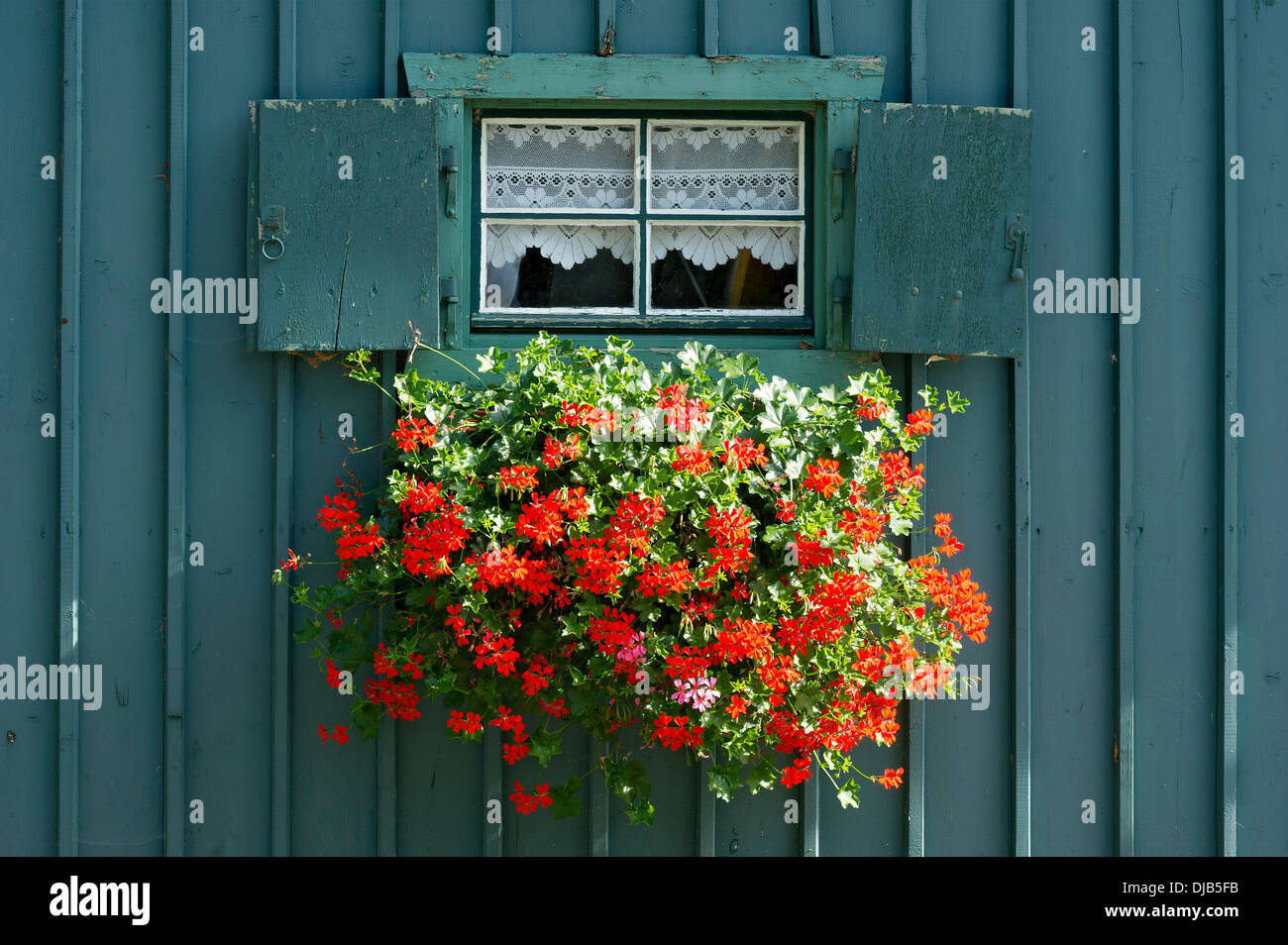 Window with shutters and flower box with geraniums (Pelargonium sp.) on petrol-coloured wooden hut, Lake Starnberg, Starnberg - Stock Image