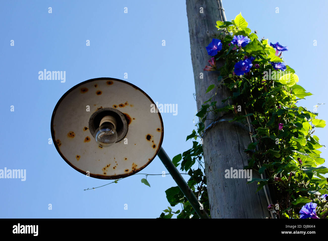 Street lamp against bright blue sky, Anacapri, Capri, Campania, Italy, Europe - Stock Image