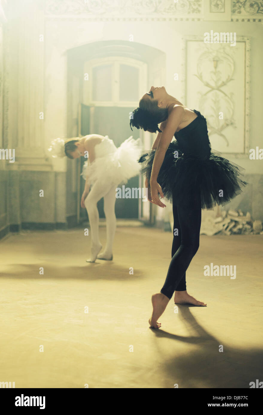 Duet of black&white young ballet swans - Stock Image