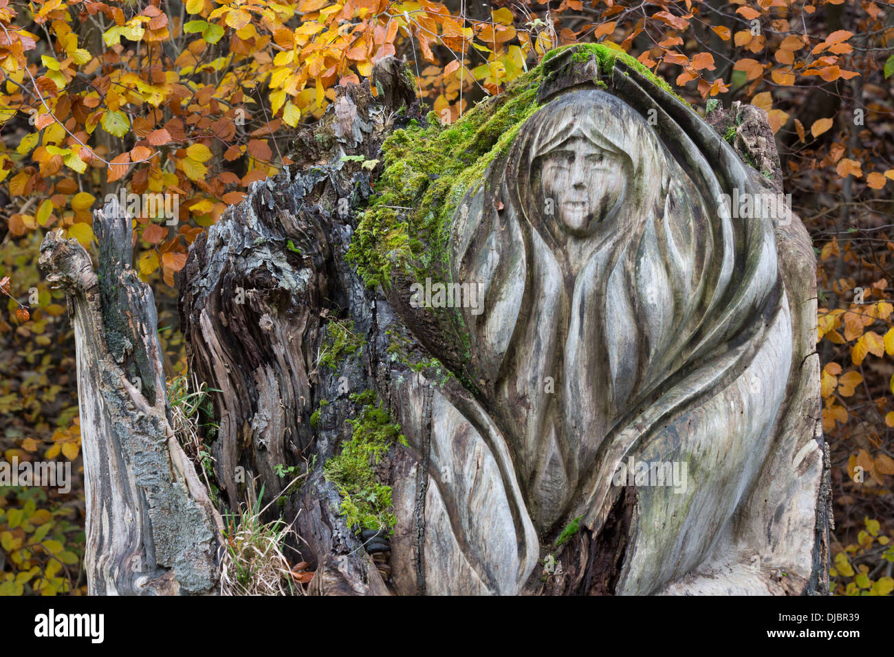 Carved tree stump at Tideswell Dale, Peak Distict, Derbyshire - Stock Image