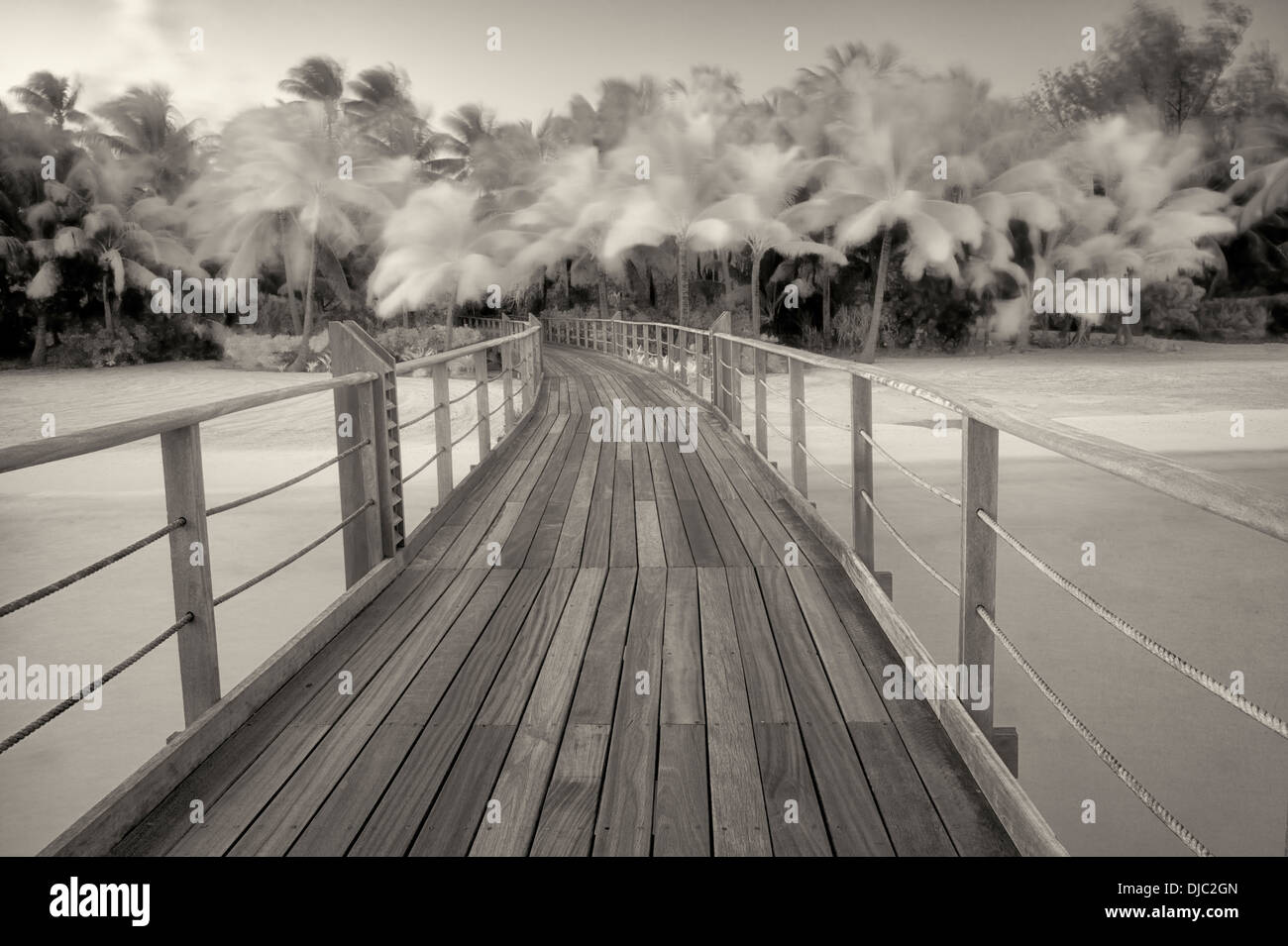 Boardwalk into palm trees blowing in the wind. French Polynesia - Stock Image