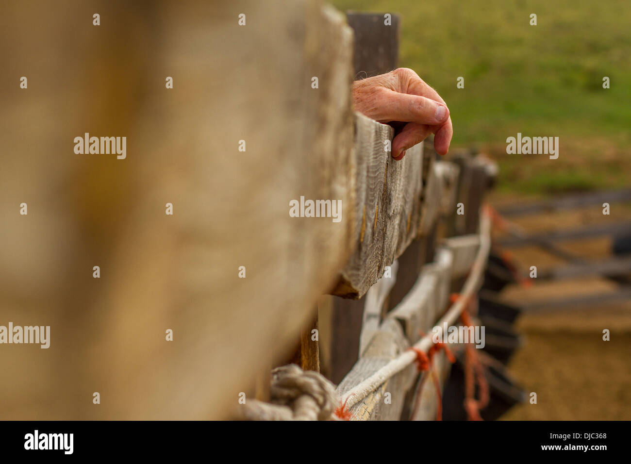 Hand on Corral Fence - Stock Image