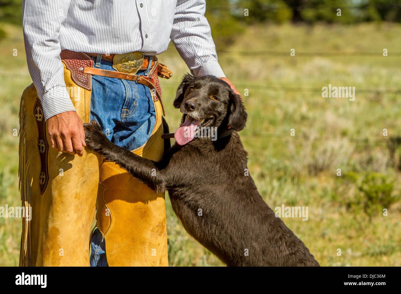 Wrangler and Dog - Stock Image