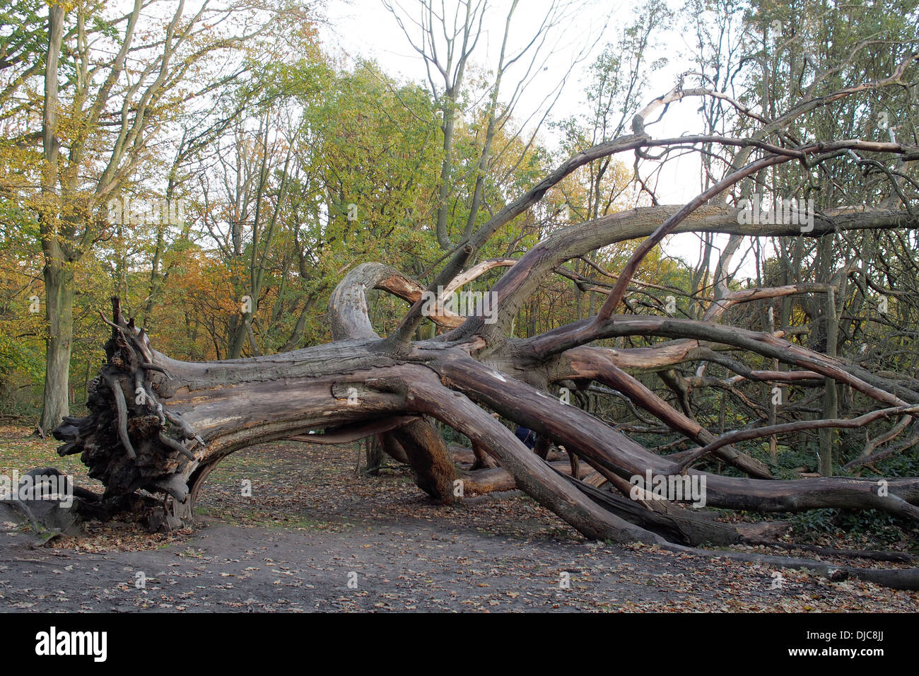 Dead tree on Hampstead Heath London England - Stock Image