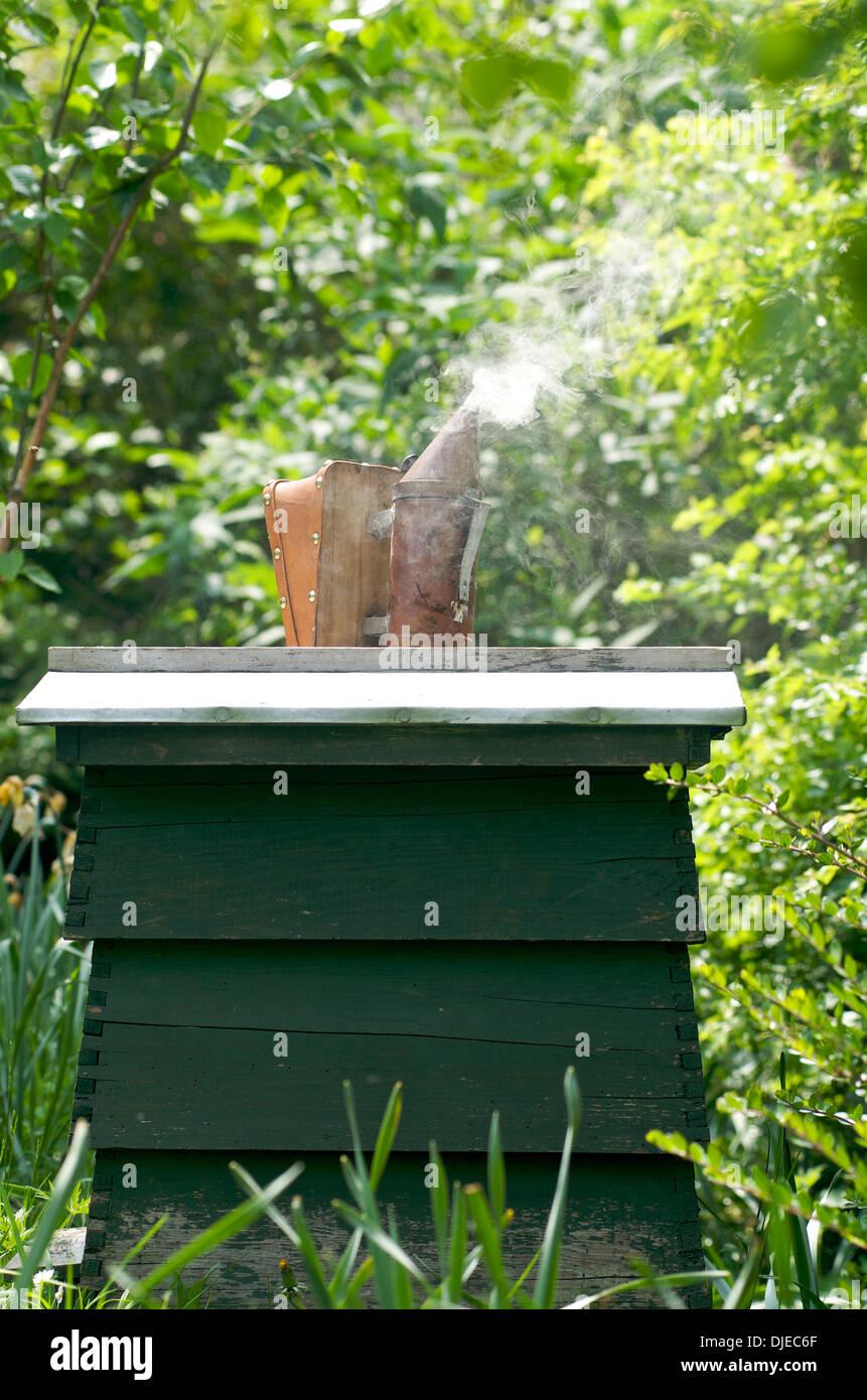 Bee hive and bee smoker, UK - Stock Image