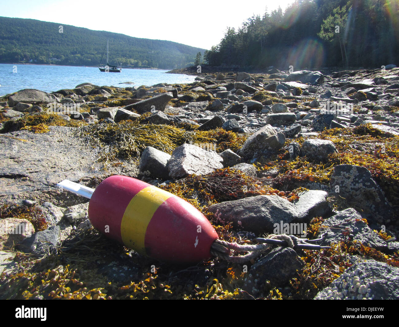A washed up lobster buoy in the fjord of Somes Sound, Maine, USA - Stock Image