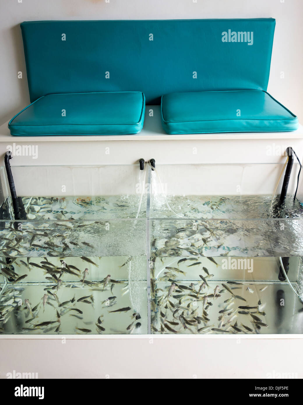 Filtered fish Spa treatment - Stock Image