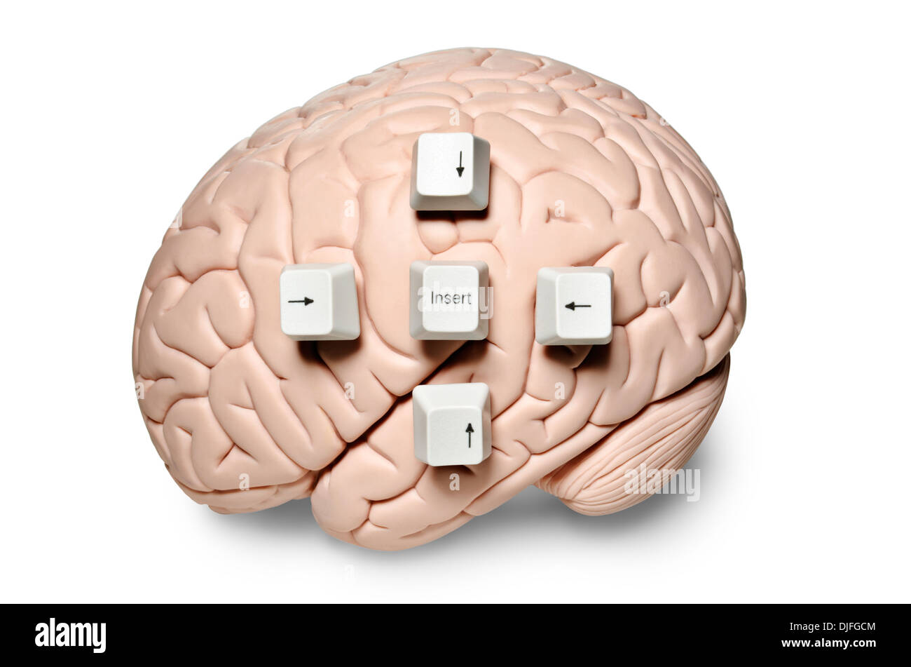 Human brain model with computer keys placed on it - Stock Image
