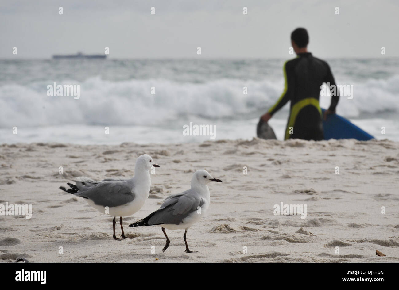 June 13, 2010 - Cape Town, SOUTH AFRICA - Seagulls walk on the beach in the Camps Bay suburb of Cape Town Sunday, June 13, 2010 in South Africa. (Credit Image: © Mark Sobhani/ZUMApress.com) Stock Photo