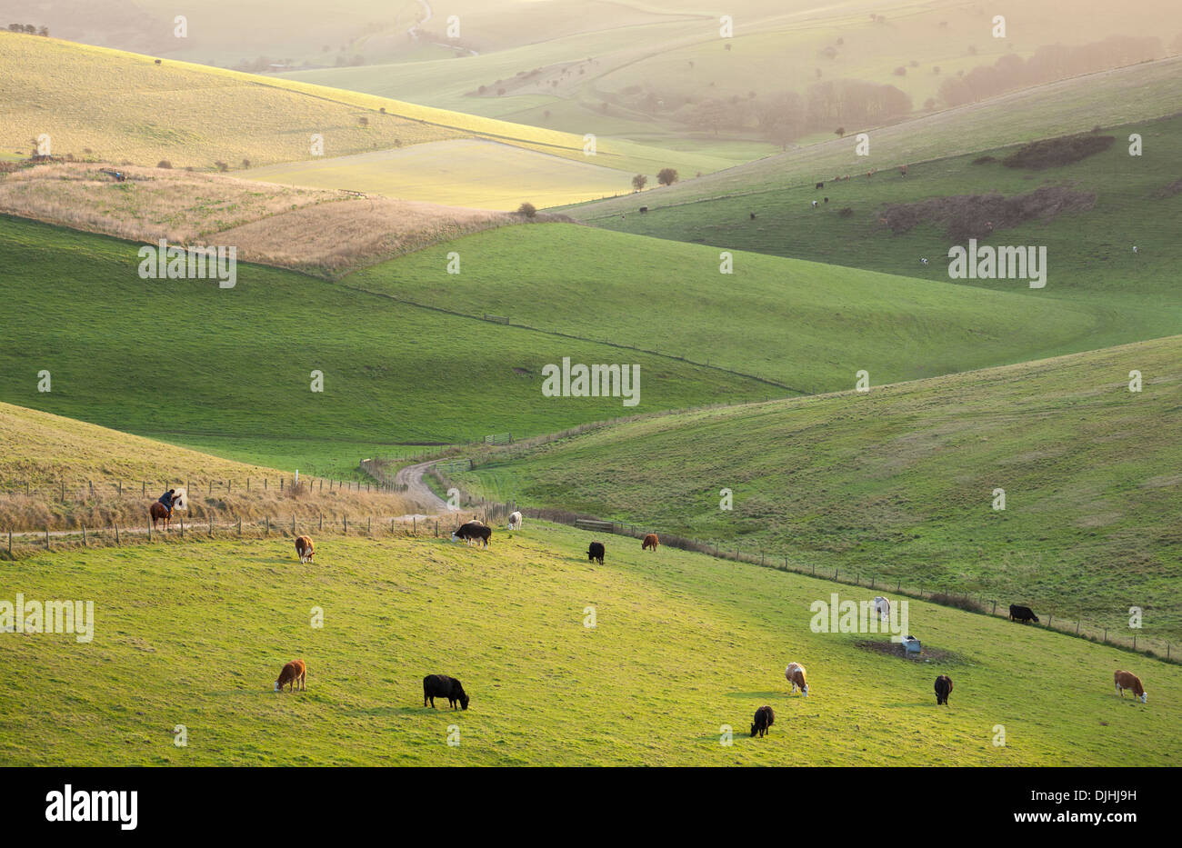 The undulating hills of the South Downs National Park, East Sussex. Stock Photo