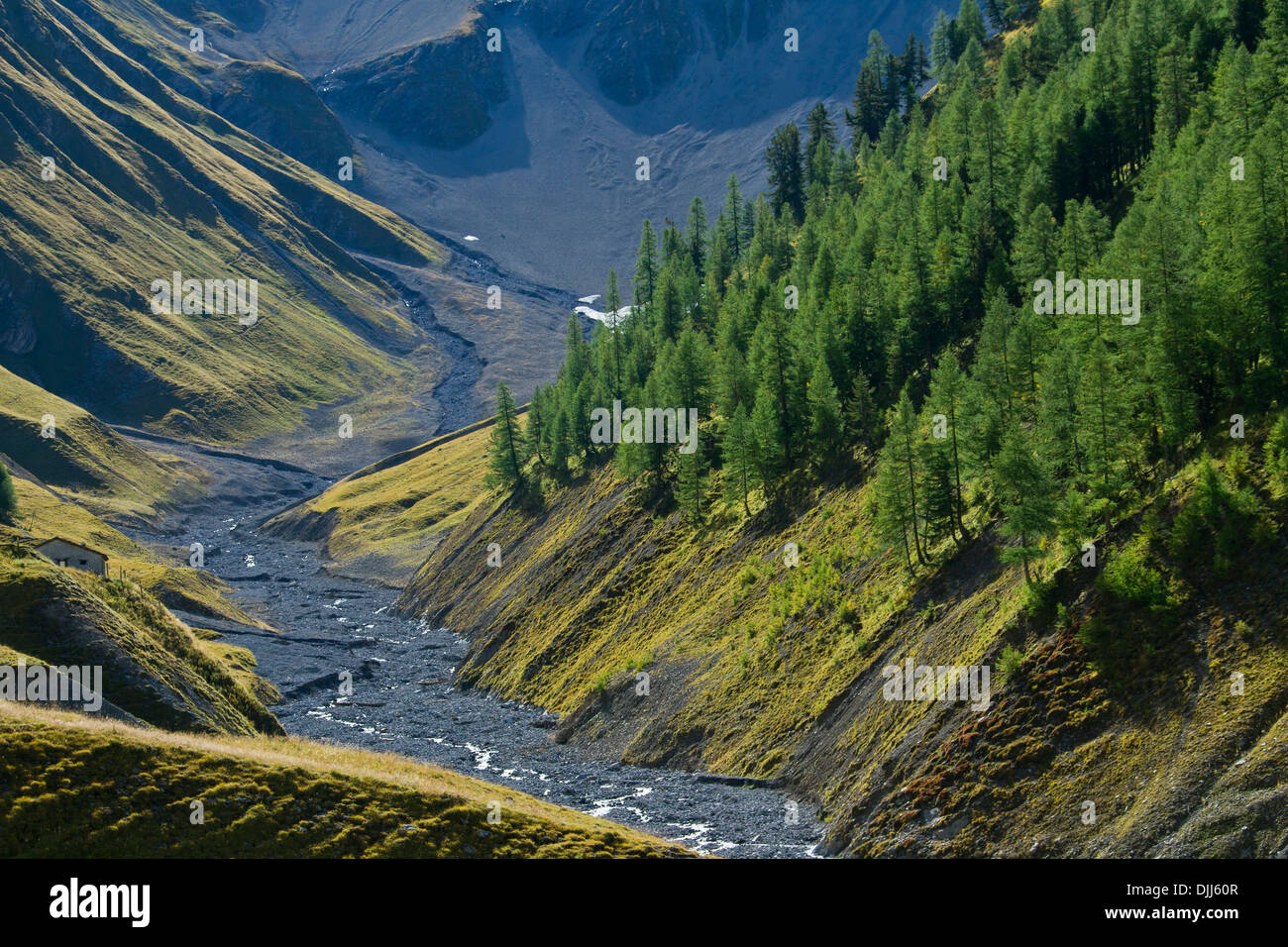 Riverbed of the river Ova da Trupchun in Val Trupchun, Swiss National Park at Graubünden / Grisons in the Alps, Switzerland - Stock Image