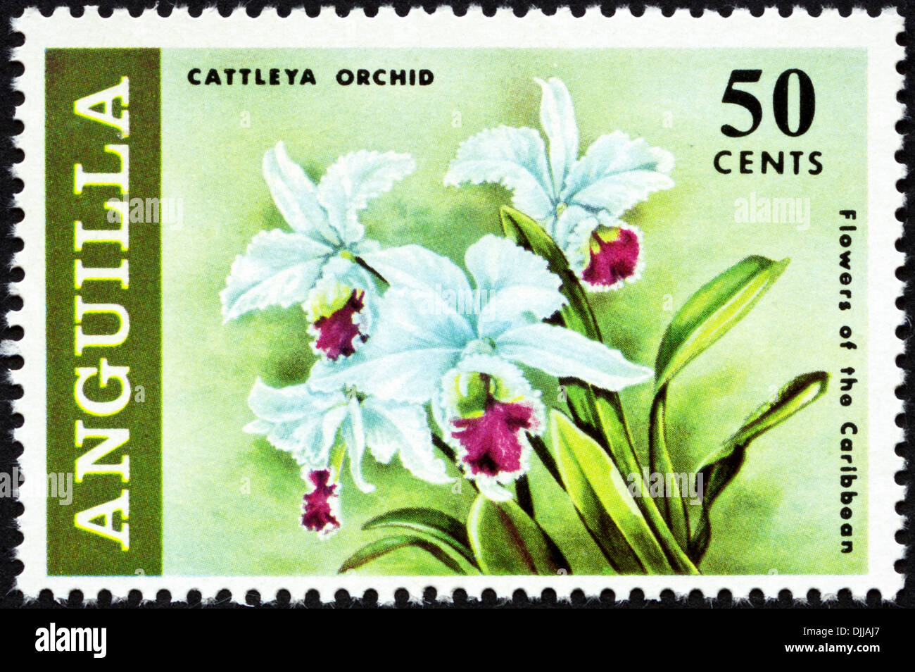 postage stamp Anguilla 50 cents featuring Flowers of the Caribbean issued 1969 - Stock Image