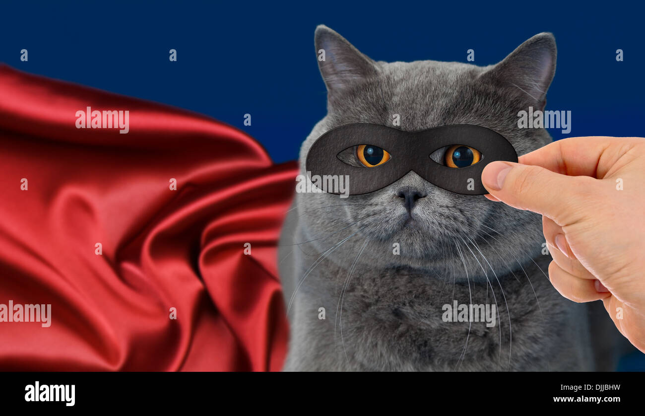 super-hero cat - Stock Image