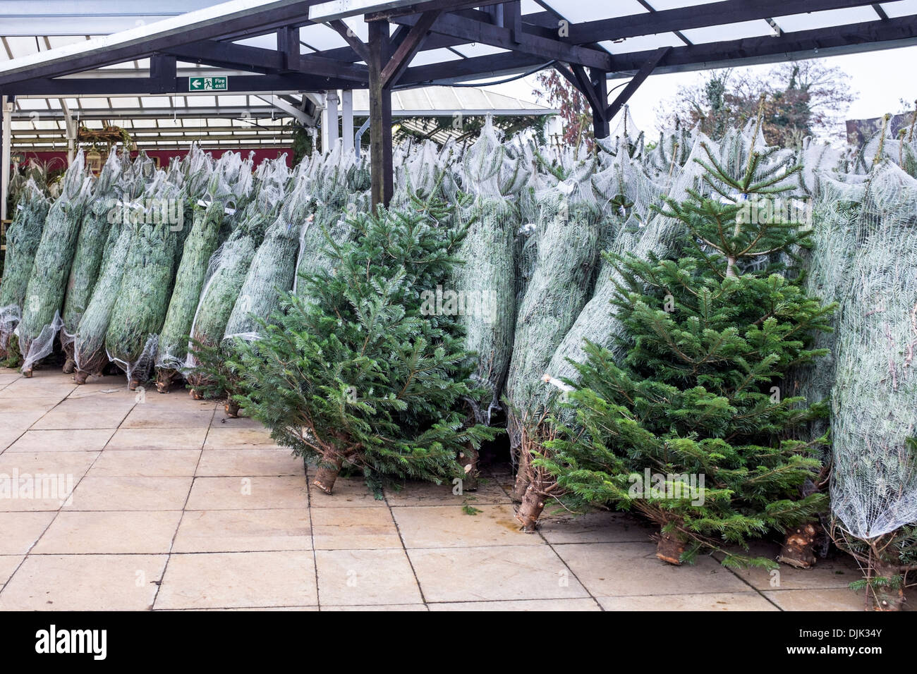 Christmas Tree Netting Stock Photos Christmas Tree Netting Stock