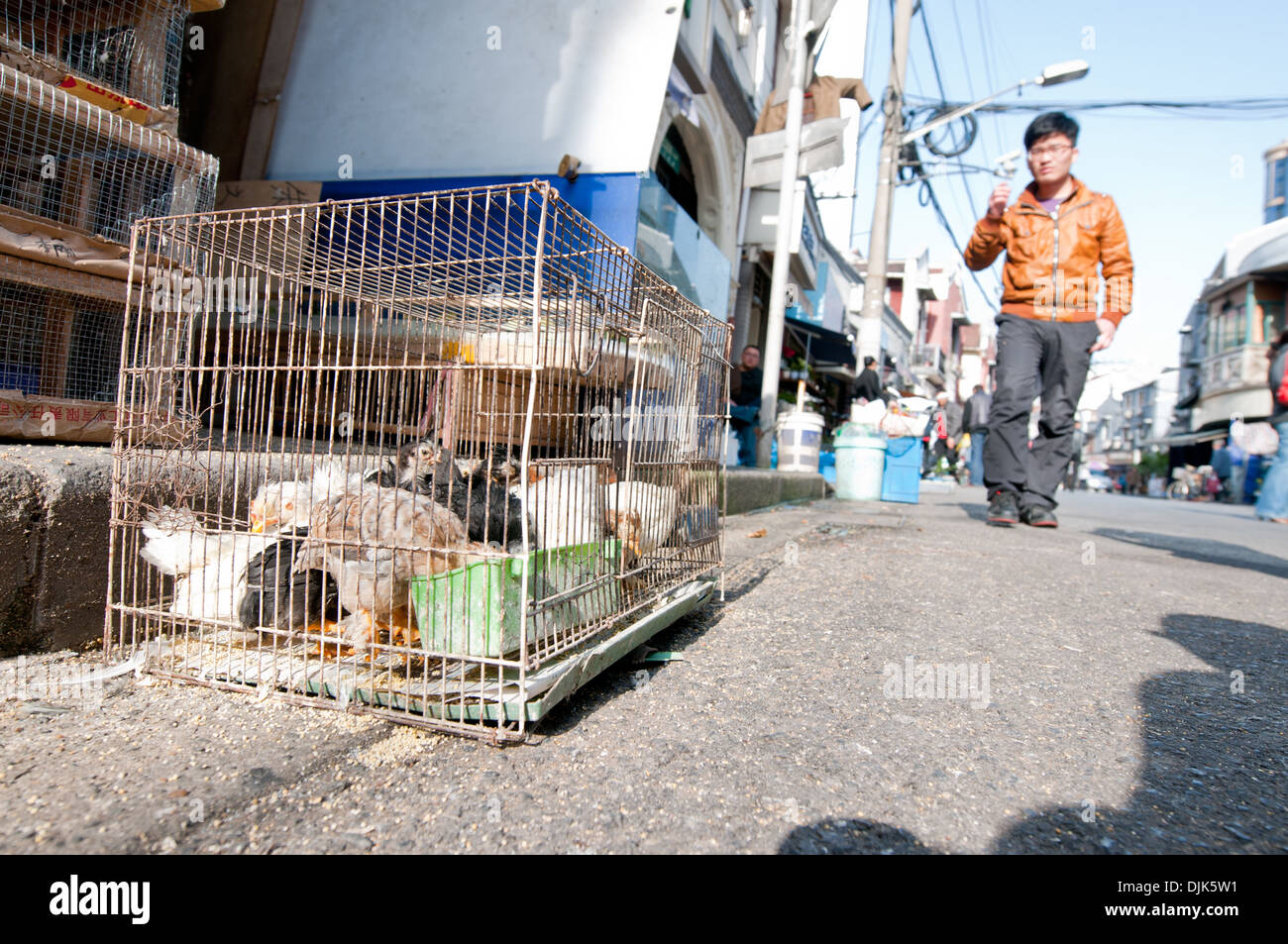 Poultry for sale at Jiangyin Road in Shanghai, China - Stock Image