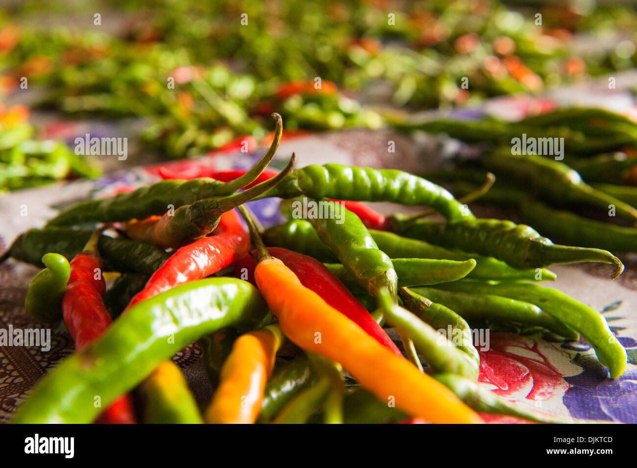 Close up of piles of chillies in Suva Municipal Market, a large fruit and vegetable market in the capital. Suva, Fiji. - Stock Image