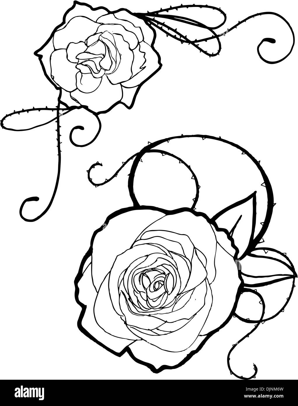 Rose Barbed Wire Black And White Stock Photos Images Alamy Book Wiring Simplified Hand Drawn Roses Image
