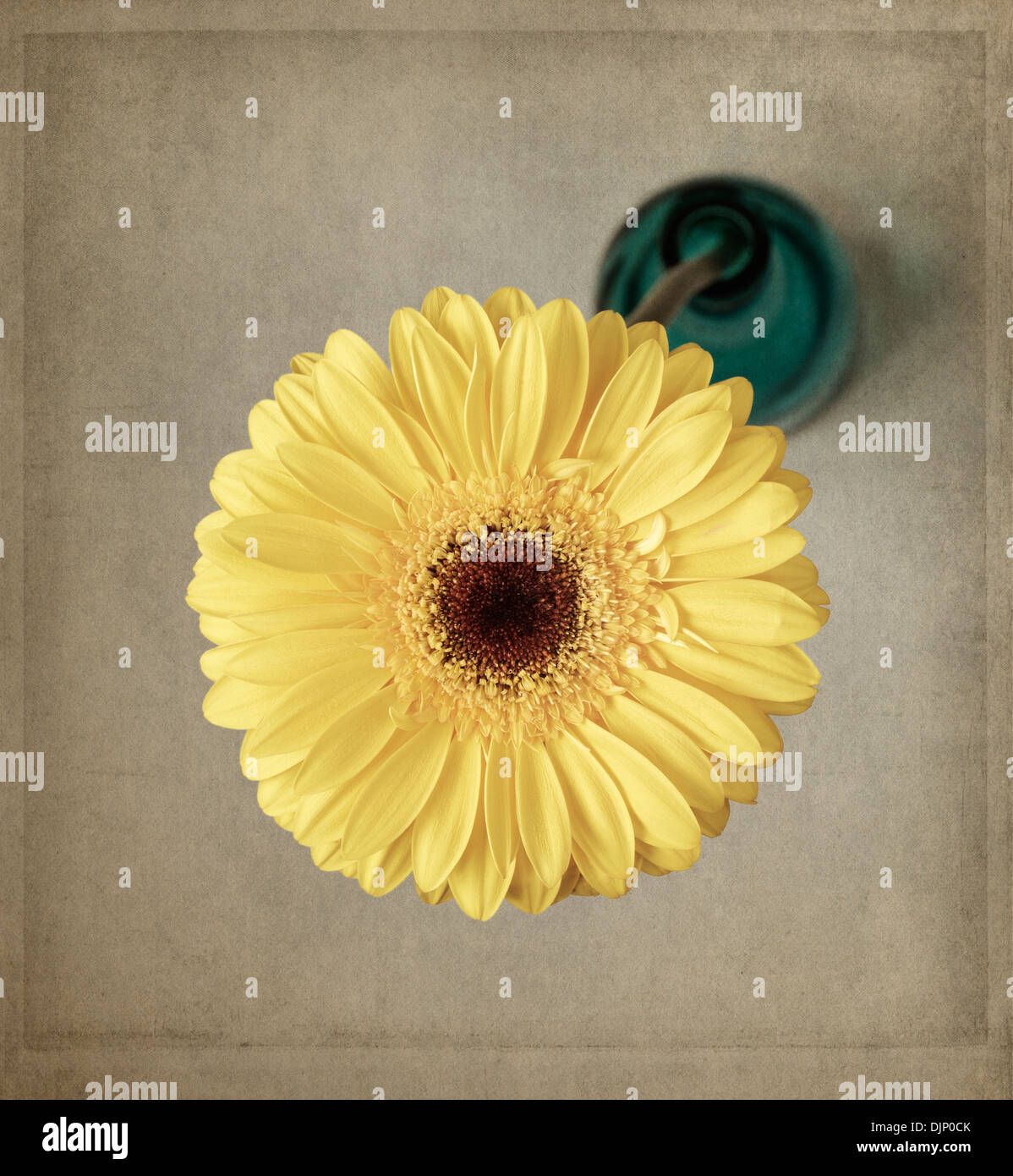 Yellow gerbera in blue vase with texture overlay - Stock Image