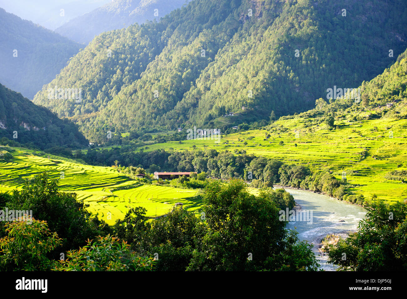 Uma Punakha Hotel views,Cascading rice Paddies,Terracing,Mo Chhu River,Farms, Bhutanese distinctive houses,Punakha Valley Floor.Bhutan - Stock Image