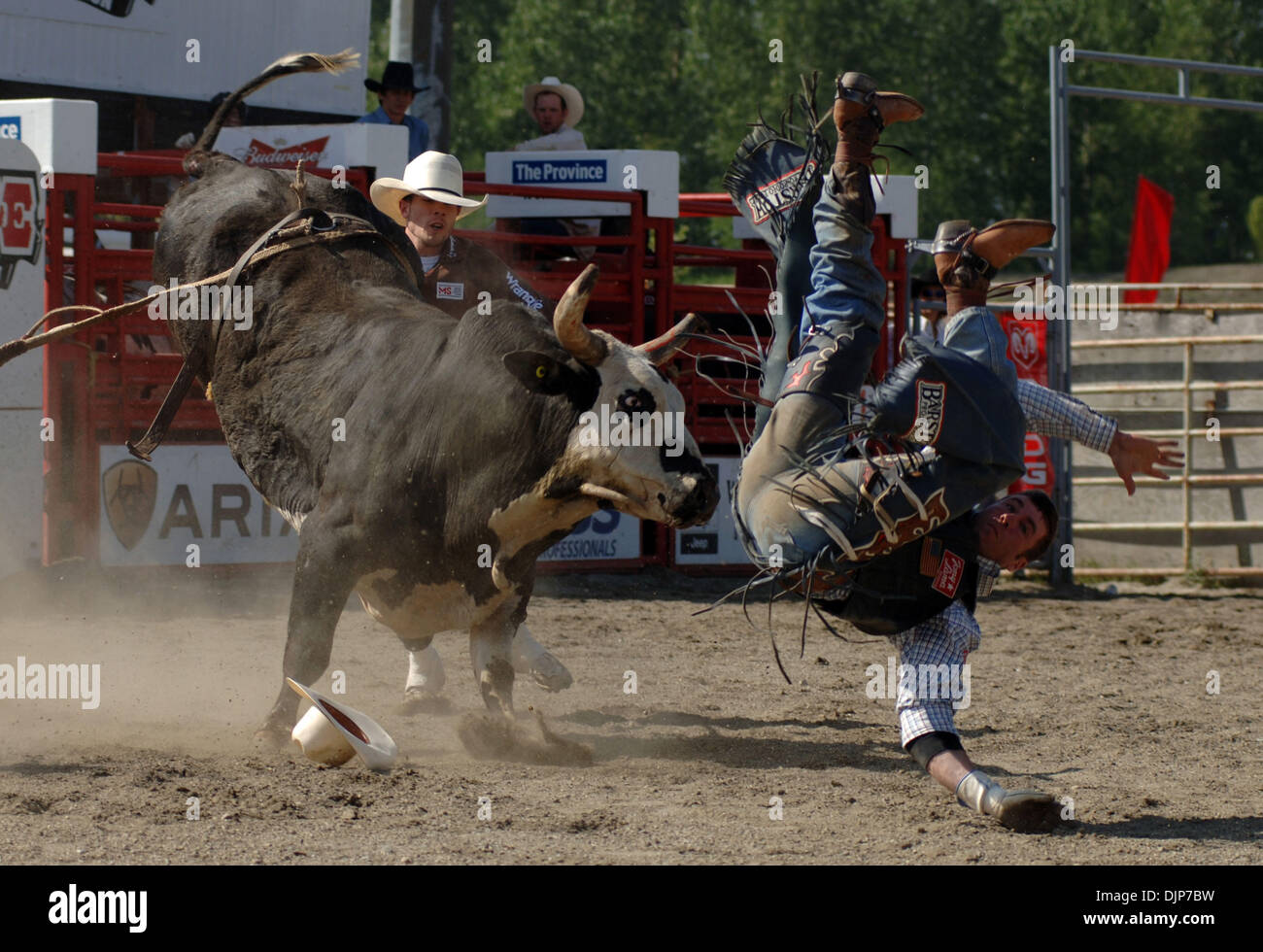 May 18, 2008 - Cloverdale, British Columbia, Canada - Cowboy competes in Bull Riding category at annual Cloverdale Professional Rodeo event. The rodeo was first held in 1945 and proved so popular that it was taken over by the Lower Fraser Valley Agricultural Association in 1947. In 1962, the fair was taken over by the Fraser Valley Exhibition Society, and in 1994, the fair and rode Stock Photo