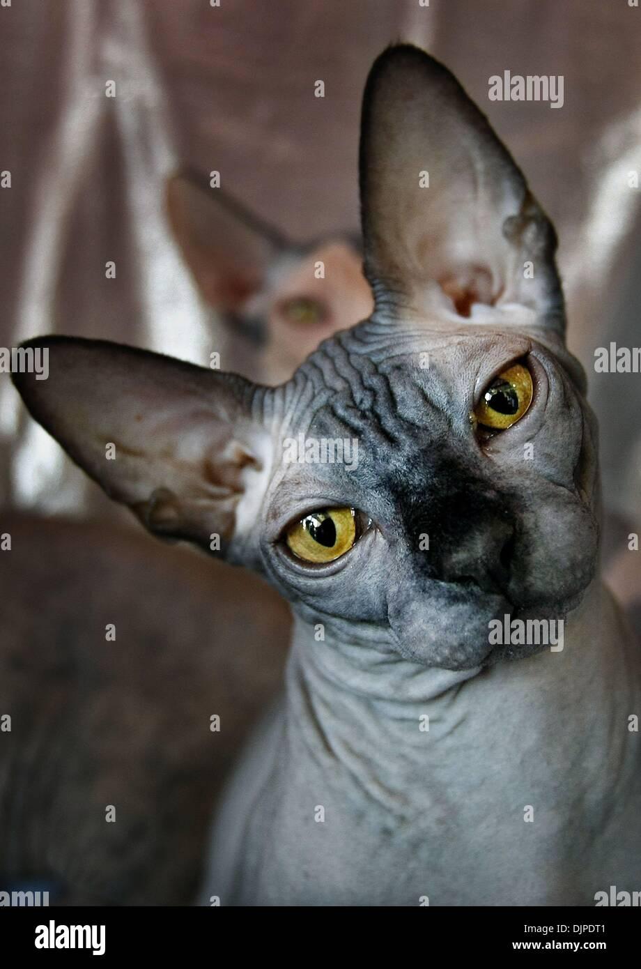 Fanciers Stock Photos & Fanciers Stock Images - Alamy