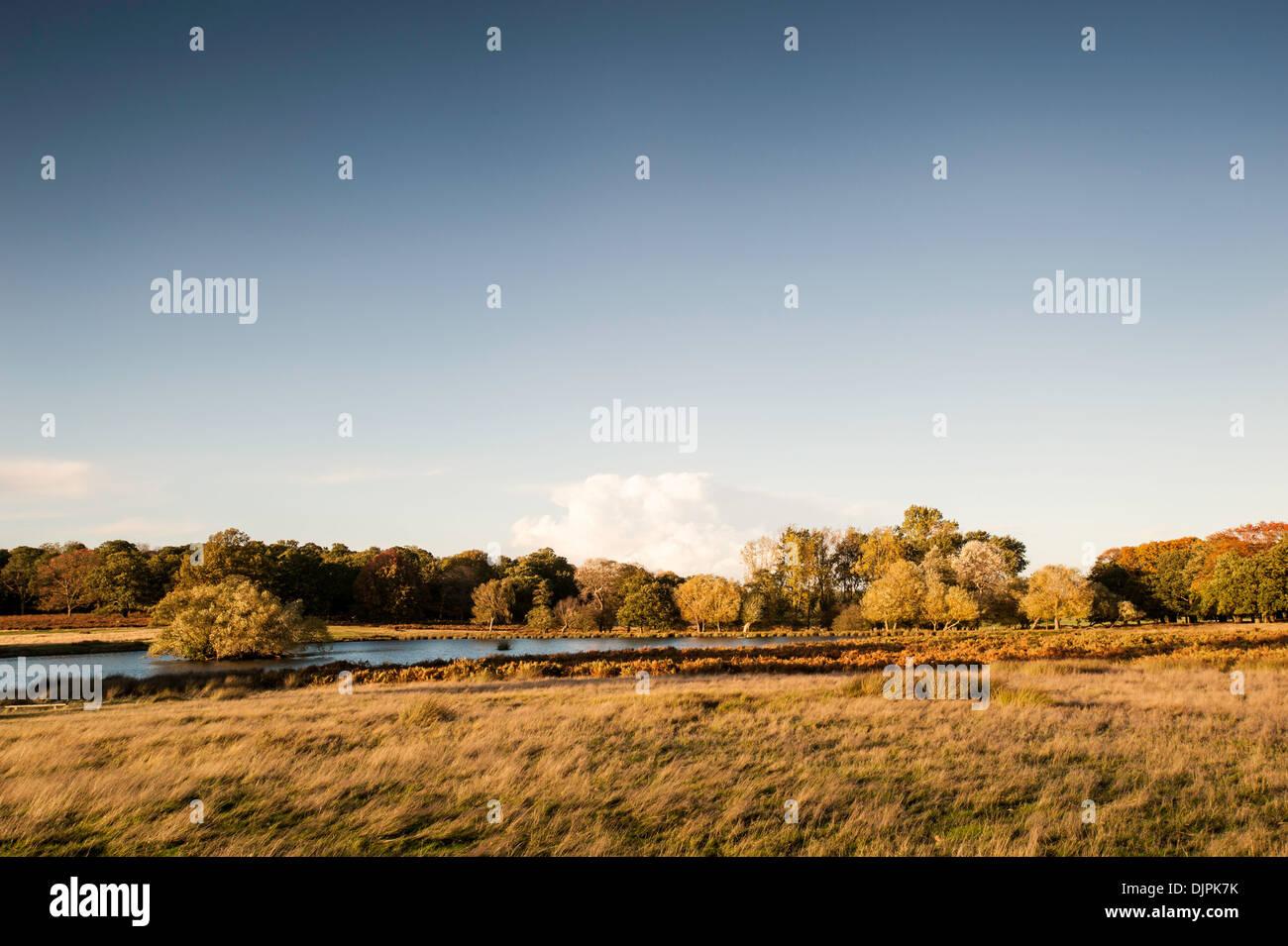 Richmond Park, Surrey, London, United Kingdom - Stock Image