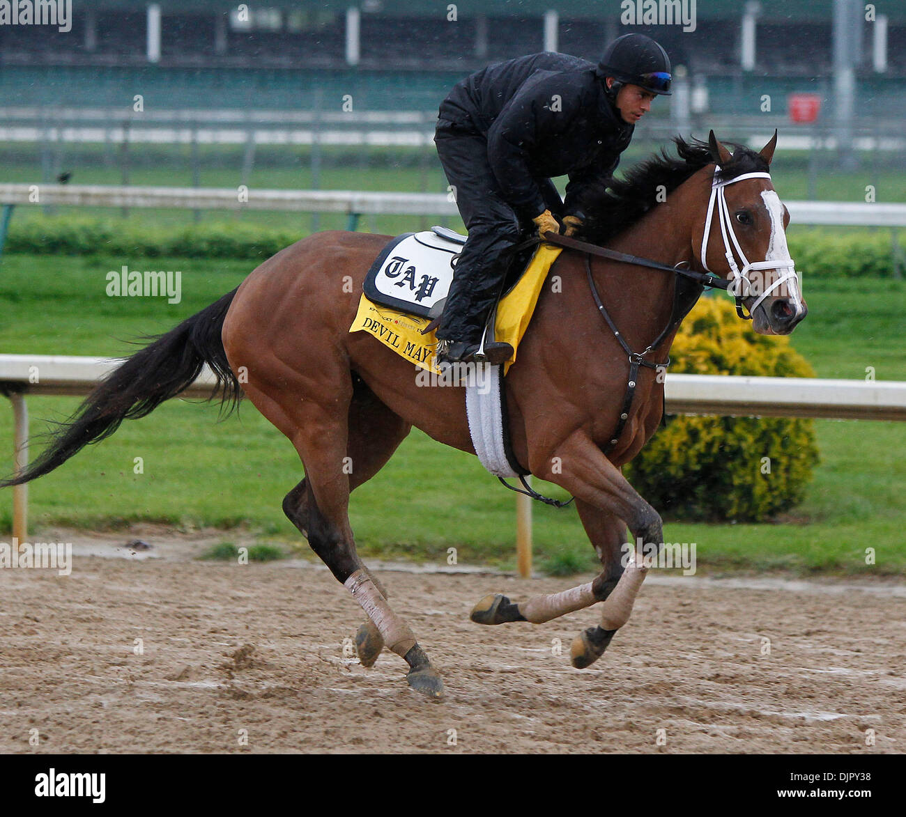 Apr. 27, 2010 - Louisville, Kentucky, U.S. - Devil May Care with  Horacio De Paz up, during Derby preparation at Stock Photo