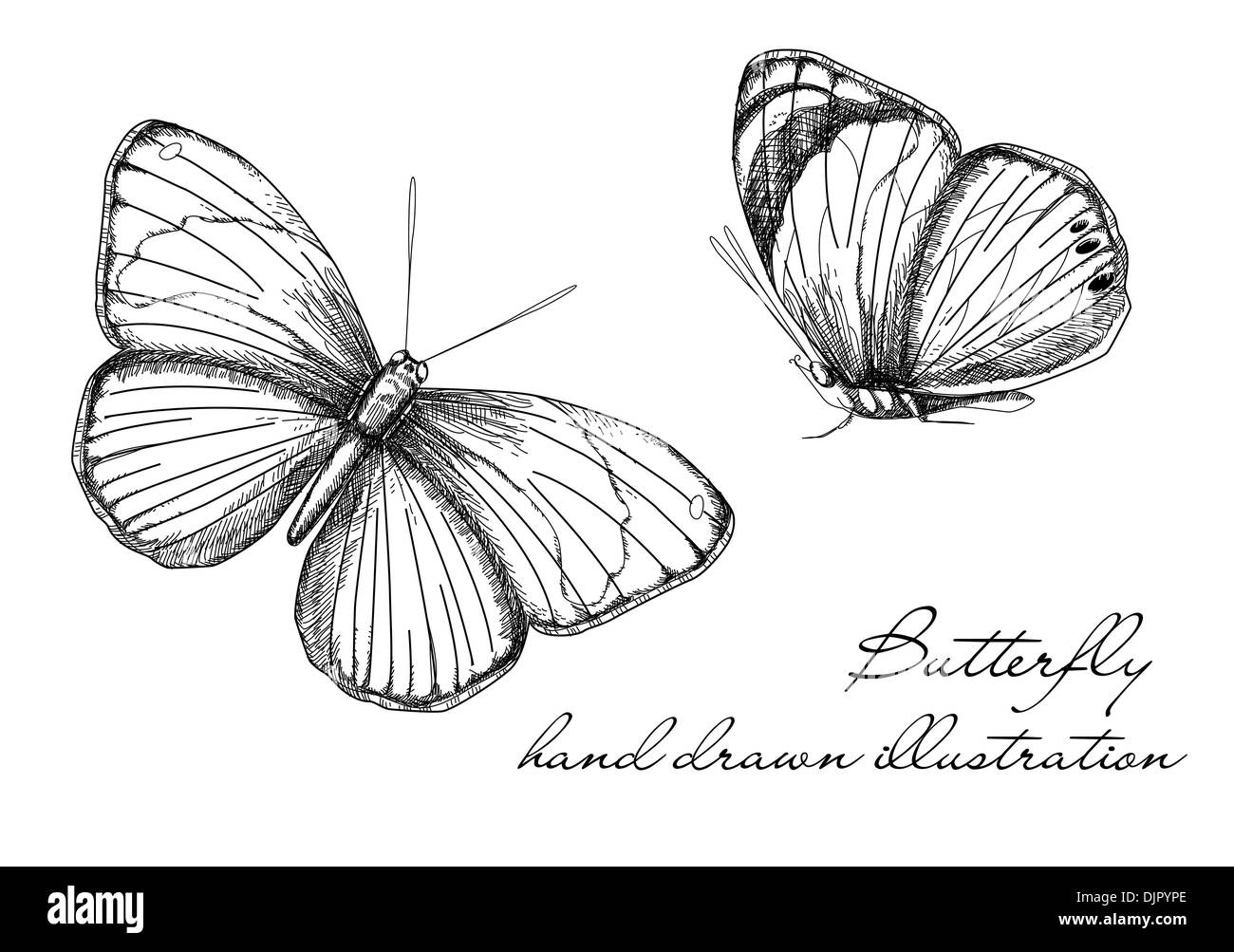 Vintage Butterfly Set Stock Vector