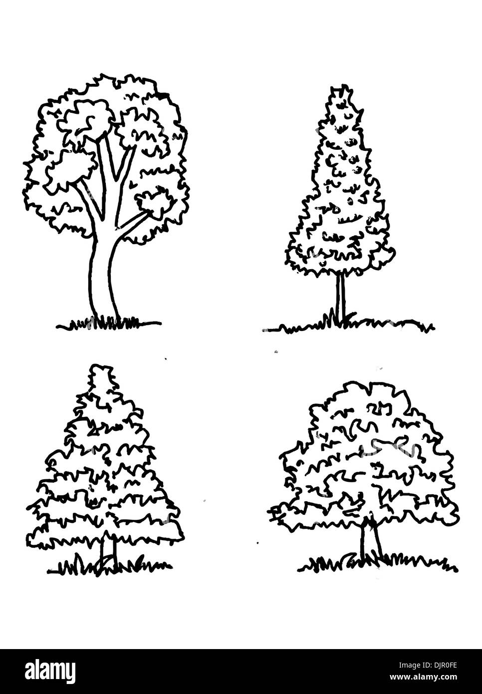 Set of trees with leaves - Stock Image