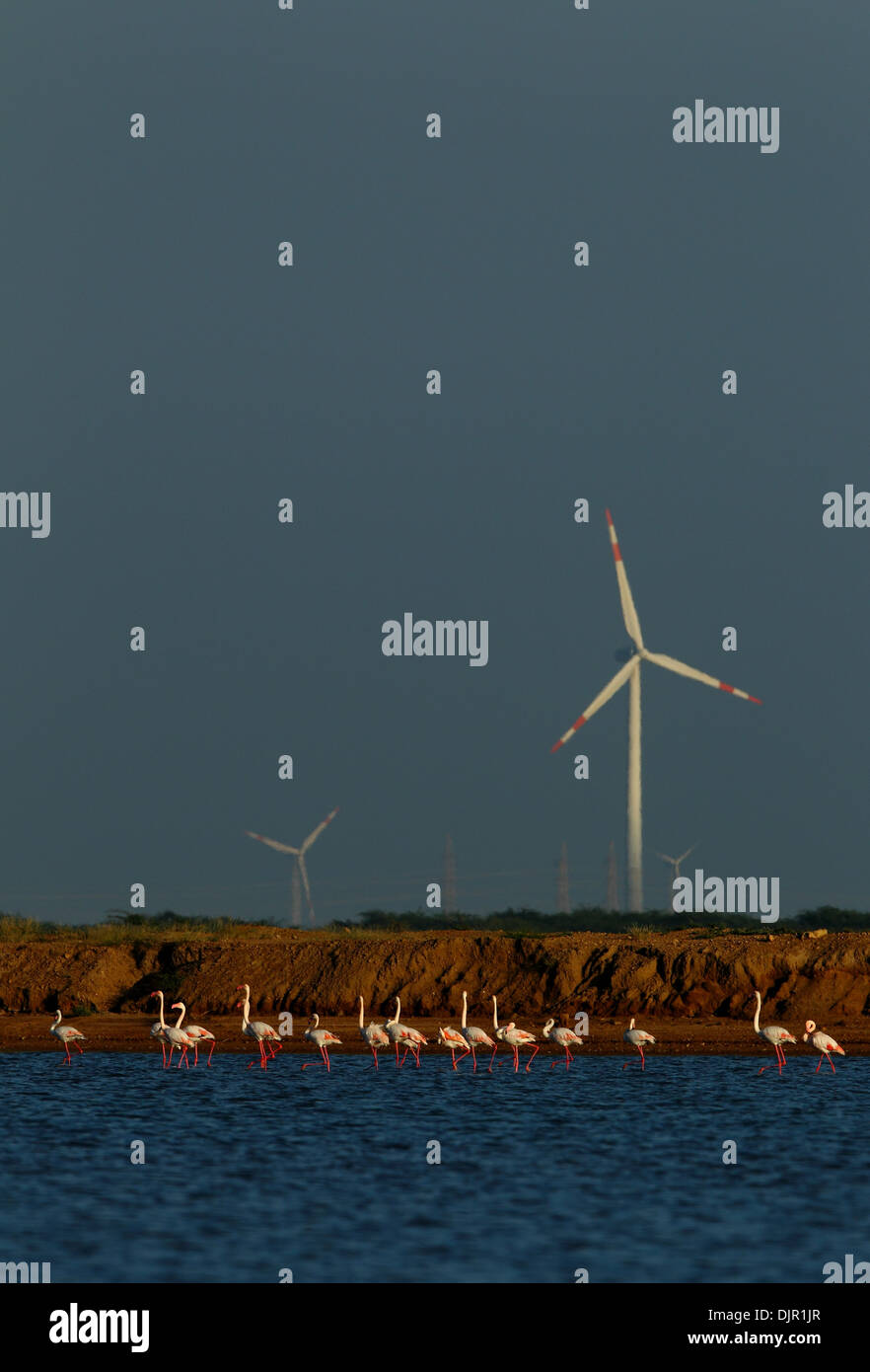 Flamingos against backdrop of wind mills in Gujarat, India - Stock Image
