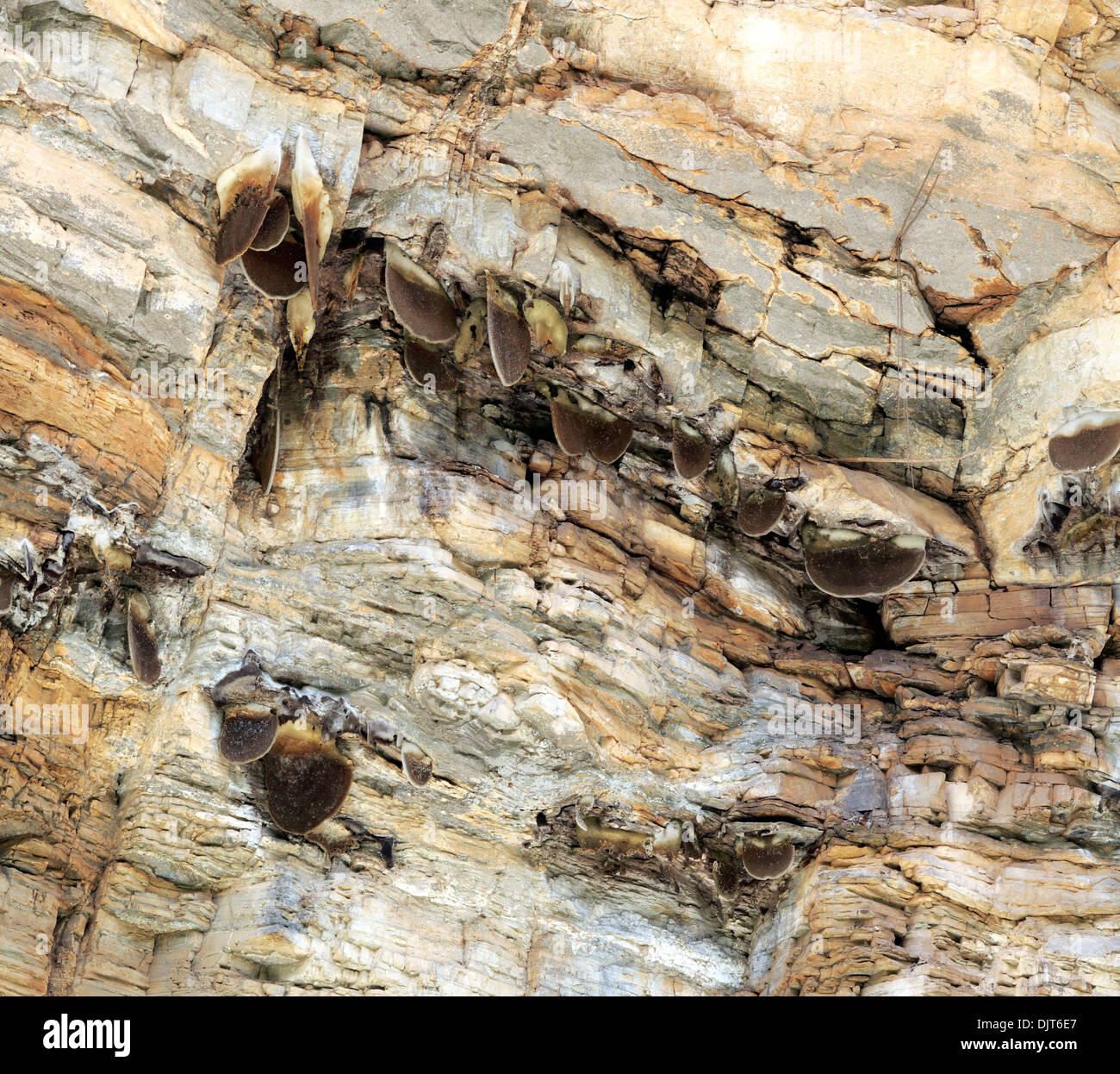 Colony of wild bees, Araniko Highway, Kathmandu Valley, Nepal - Stock Image