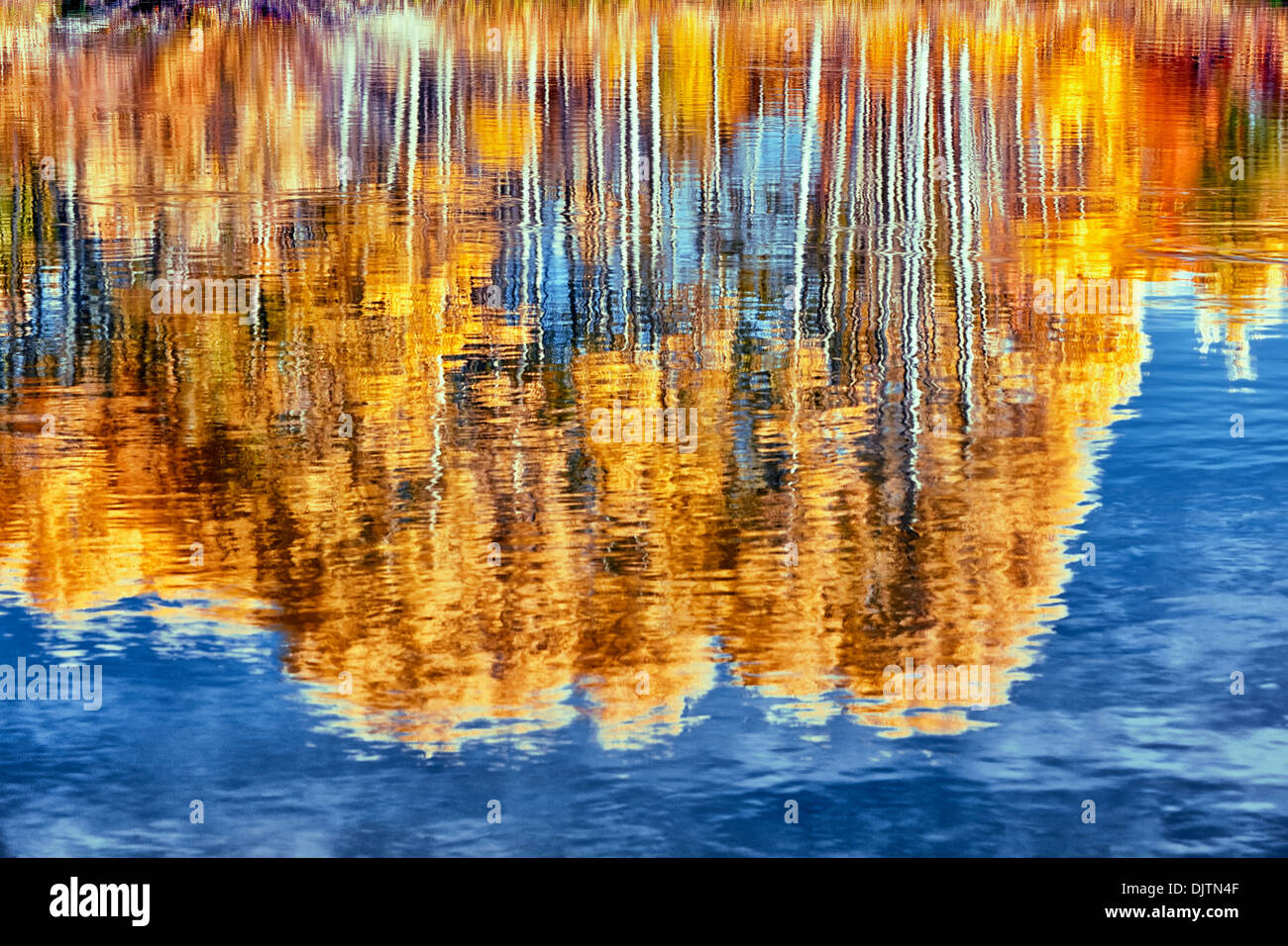 Autumn gold of aspen trees shimmer in central Oregon's Deschutes River. - Stock Image