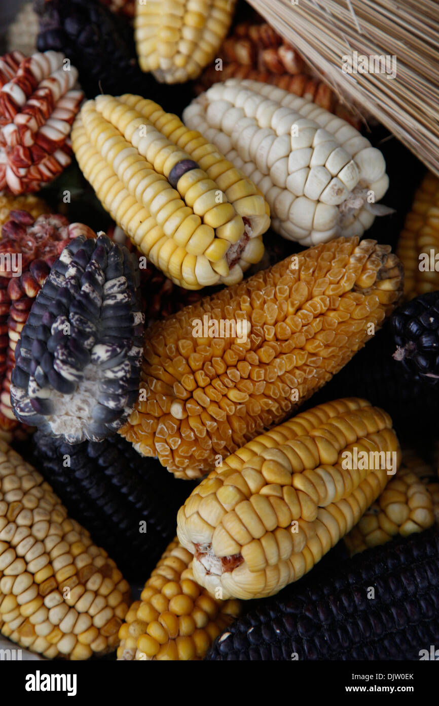 Andean corn at the San Pedro market, Cuzco, Peru. - Stock Image