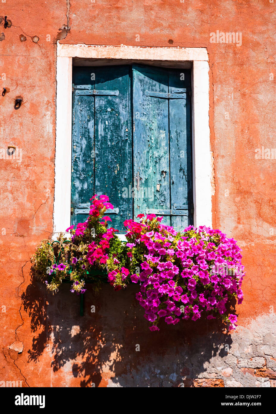 Window box full of trailing petunias, Murano, Venice, Italy. - Stock Image