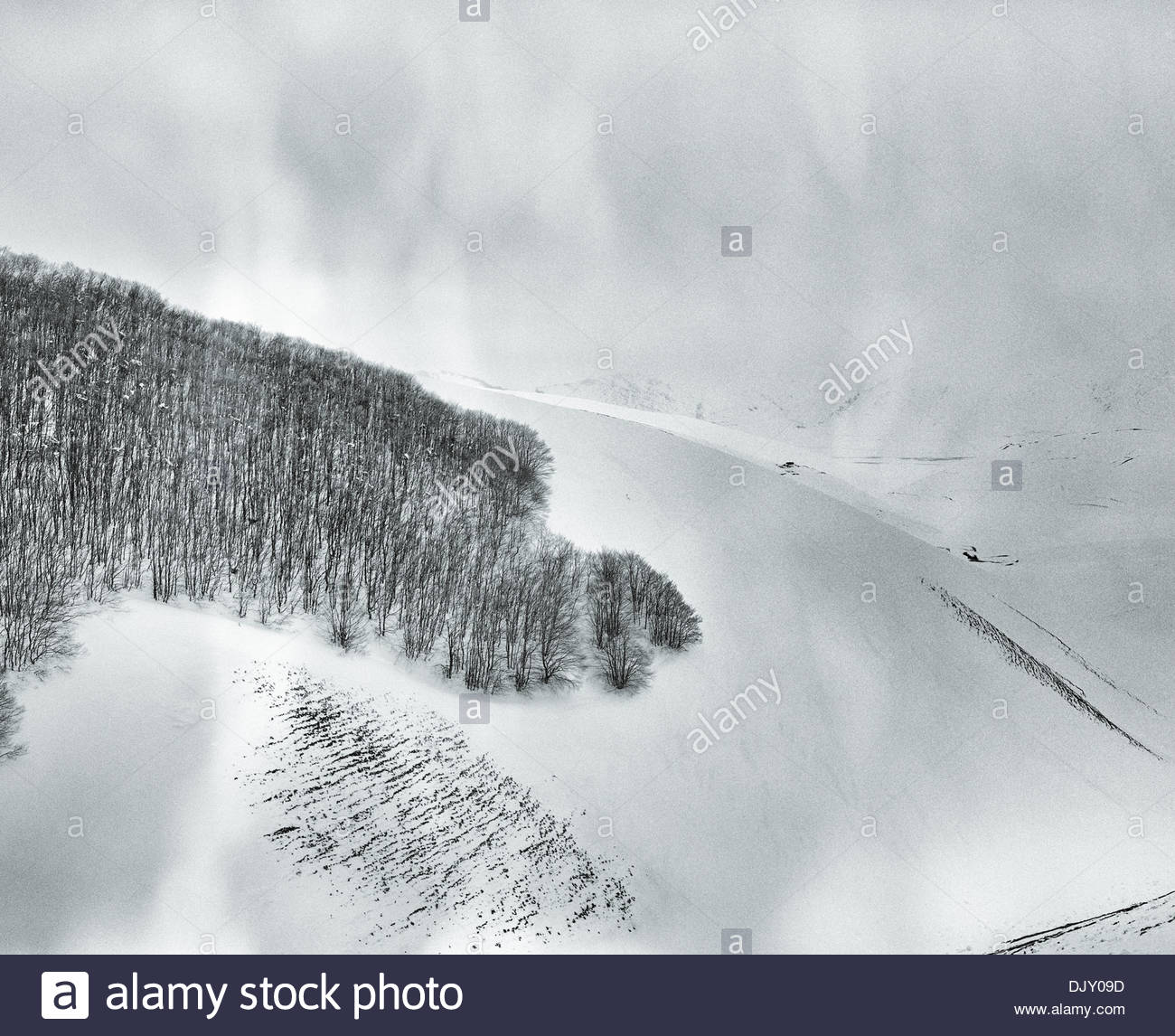 Fragmented edges of an old forest on the snow plains of le Marche, Italy. - Stock Image