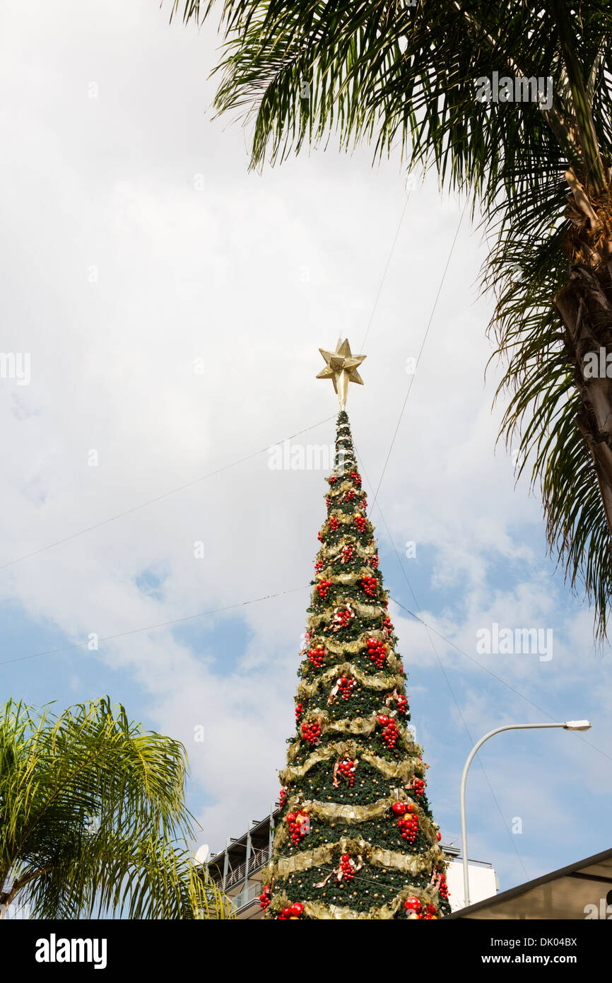 Cyprus Christmas Tree Stock Photos & Cyprus Christmas Tree Stock ...